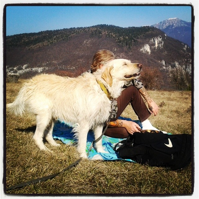 my #dog fedele compagno da 9 anni ...... #dogsofinstagram